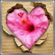 Heartflower_card