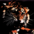 Angry-tiger-wallpaper_tiny_square