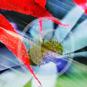 Reddaisy_card