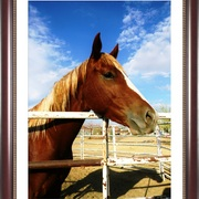 H_dscn8778_chestnut_stallion_frm444_dla_card