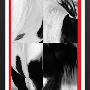 A_abstract_rhr_paint_horse_bw_1_card