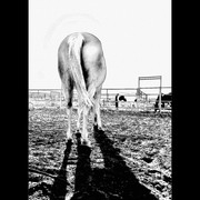 S_dscn8300_horse_butt_sunset_sketched_frm999_card
