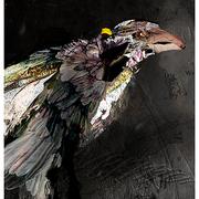 Raven_9_card