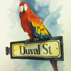 Duval-parrot_thumb