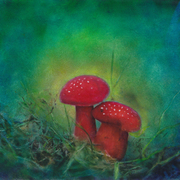Mushrooms2_card