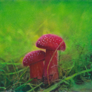 Mushrooms3_card