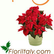 Fioriitaly_m_card