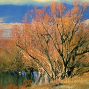 Creekside_autumn__south_island_card