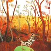 18woodthrush_card