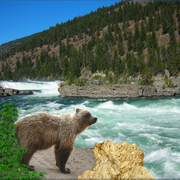 862-bear_rapids_card