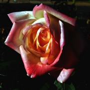 Rose_with_water_colour_effect_card