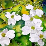 Dogwood_tree_flowers_small_card