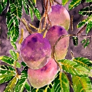 Mango_tree_painting_small_card