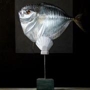 201210sundriedmoonfish60x80cm_card