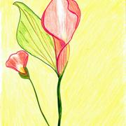 Laura_s_art_cala_lilly_001_card