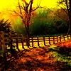 1_p_fence_golden_thumb