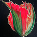 Red___green_tulip_for_web_square