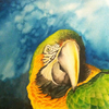 Parrots_thumb