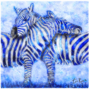 Zebrablues_nyweb_card