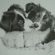 Puppies_card