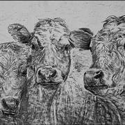 Cows60x40_web_card