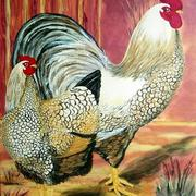 Rooster_hen_card