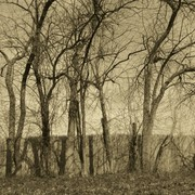 Trees_and_fence_sepia_card