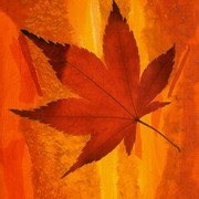 October_light_card