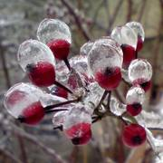 Winter_fruits_card