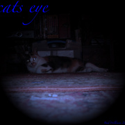 Cats_eye_vol