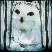 Snowowl_snapseed_card