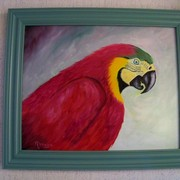 Red_macaw_card