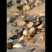 Morning_shoreline_3_card