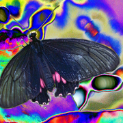 Stoned_buterfly_card