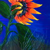 Blue_sky_sunflower_thumb