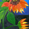 California_orange_sunflower_thumb