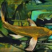 Golden_river_koi_card