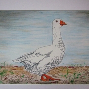 Snow_goose_card
