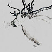 Caribou_card