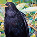 2012_bird_friend2_50x60m_square
