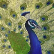 Proudpeacock_card