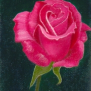 Rose1_card
