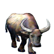 Guilin_water_buffalo_art1_card