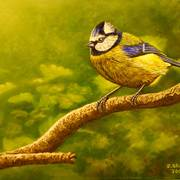 Bluetit_card