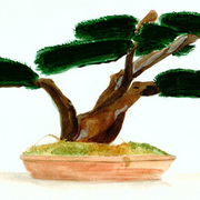 Bonsai_card