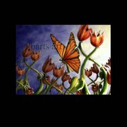 Butterfly_flower_card