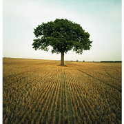 Wheat_tree_web_card