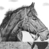 Pet_portrait_horse_lg_thumb