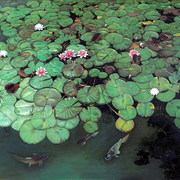 Water_lilies__oil_on_canvas__145