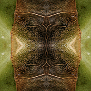 Abstraction__the_leaf_of_the_cabbage__card